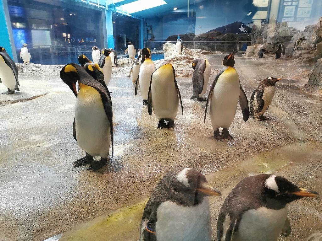 ペンギン水族館の亜南極ペンギンゾーン