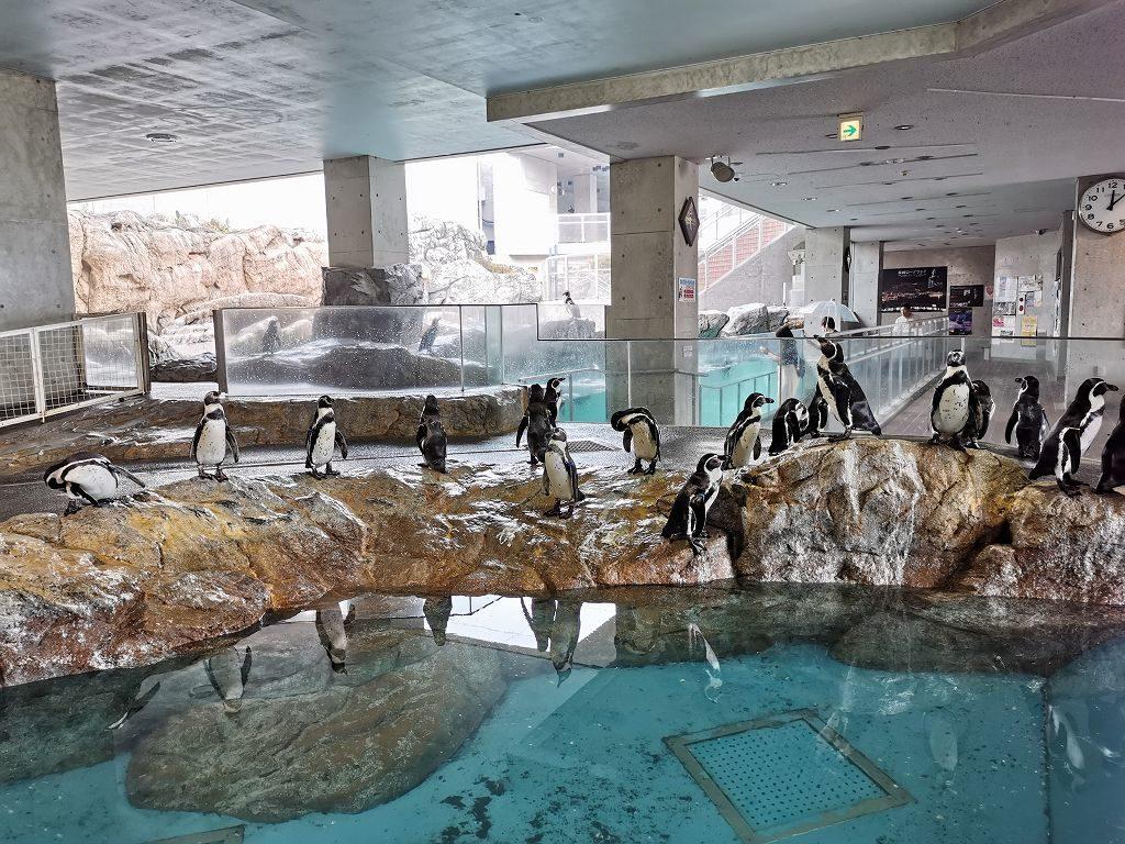 ペンギン水族館の温帯ペンギンゾーン