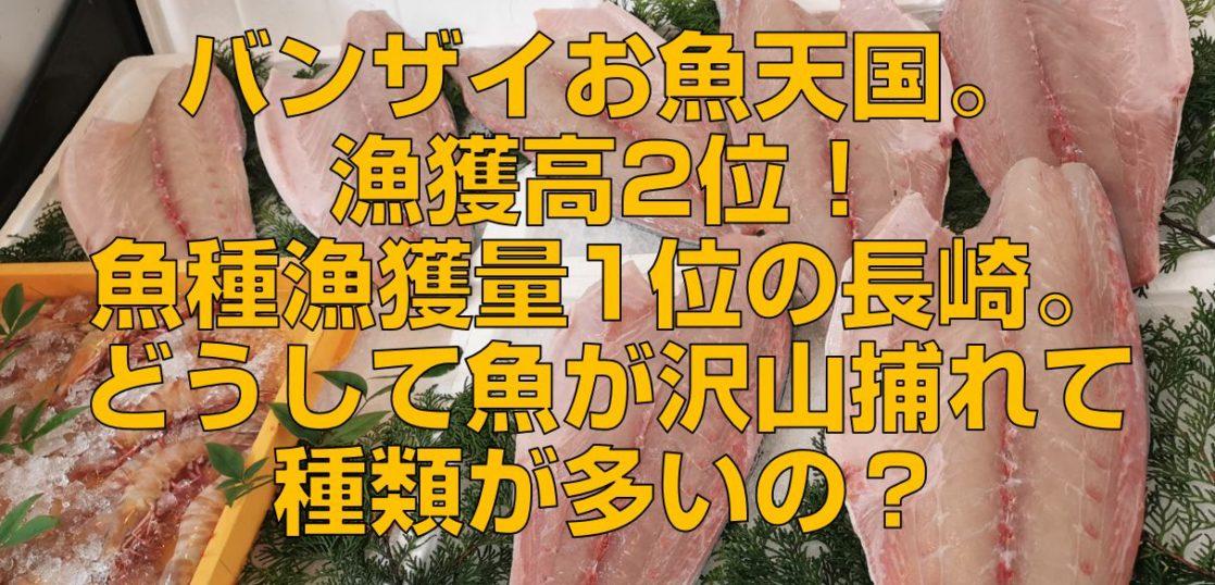 バンザイお魚天国。漁獲高2位!魚種漁獲量1位の長崎。どうして魚が沢山捕れて種類が多いの?