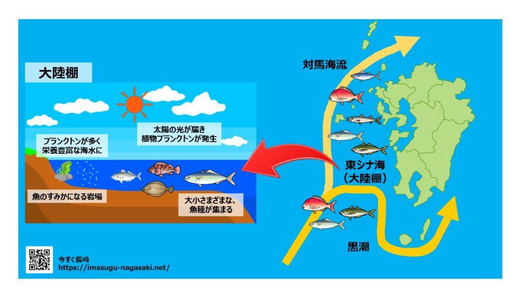 漁獲高2位!魚種漁獲1位の長崎の立地。東シナ海の大陸棚と対馬海流